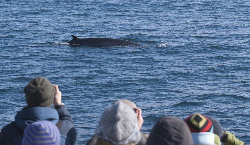 Reykjavík Classic Whale Watching - Outdoyo